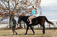 引き馬体験