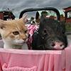 ネコ・ミニ豚